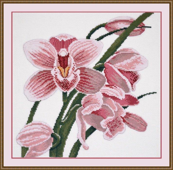 Рисунок для вышивки орхидеи 63